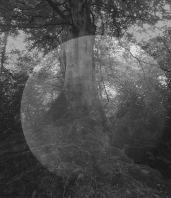 tree_moon.4.12.15